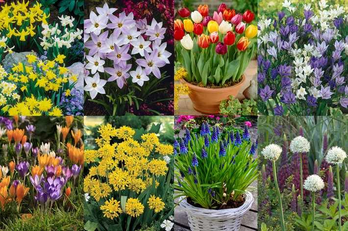 BLOOMING DIRECT: is a specialist online supplier of top quality plants, seeds and bulbs. We supply plug and starter plants